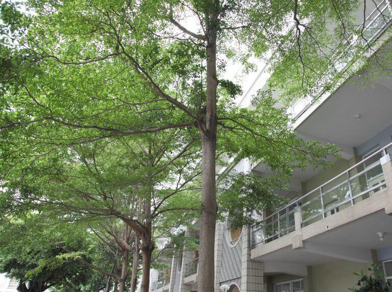 教室外翠綠的樹木讓人身心放鬆