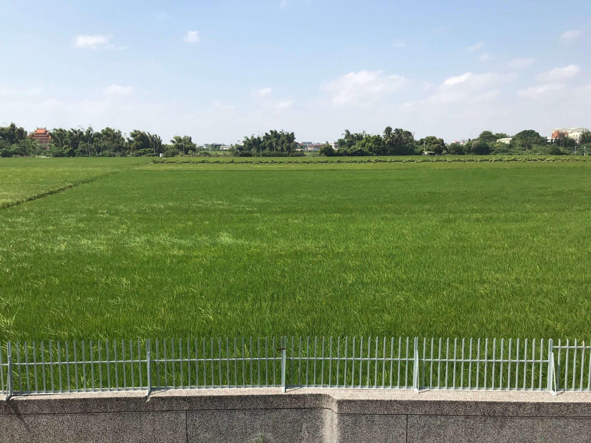 鄰近美麗的稻田讓同學身心舒暢